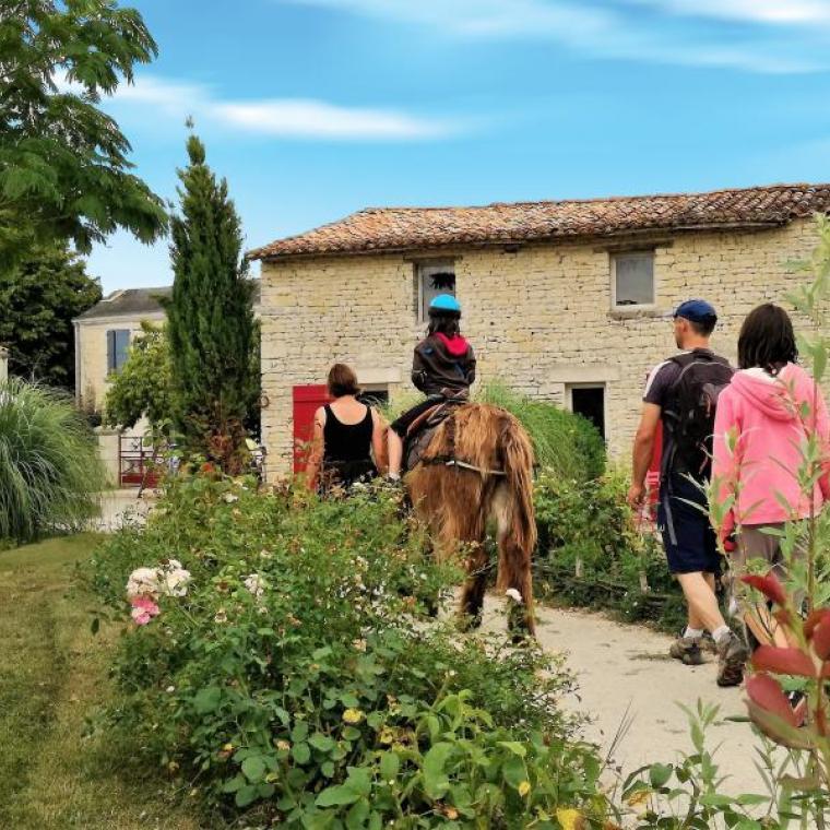 Marais poitevin : Balade avec des ânes
